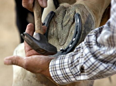 horseshoer.jpg